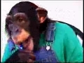 Monkey Brushes Teeth