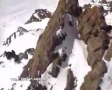 Possibly the best base jumping / wingsuit video ever
