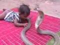 Baby .vs. Cobra