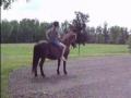 Bareback Saddle Pad