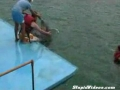 Dolphin Getting Busy