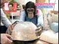 Monkey Makes Popcorn